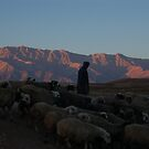 Shepherd at sunrise, Iran by Peter Gostelow