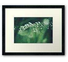 Precious emeralds Framed Print