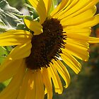 Sunflower Profile by Anna Lisa Yoder