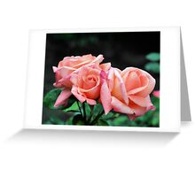 Peach Rose Trio Greeting Card