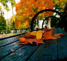 Fall Bench by RDJones