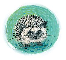 baby hedgehog Photographic Print