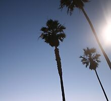Palm Trees by Chello