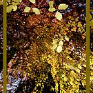 Autumn Frame by Stormswept