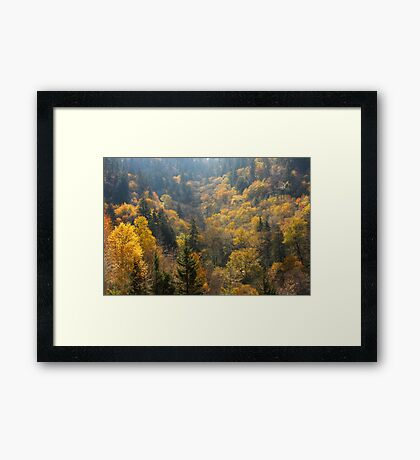 Valley Of Gold Framed Print