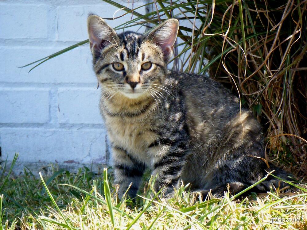 Kitten resident at Claudia Sanders Resturant by goldnzrule