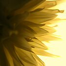 Flower Abstract by CinB
