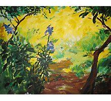 Irises and Sunlight Photographic Print