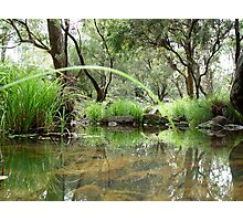 Murphy's Creek Photographic Print