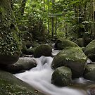 Rain Forest by Steven  Siow