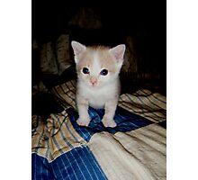 Who Me?? Wild Bill Kitten Photographic Print