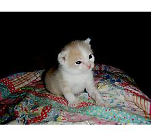 Wild Bill Hickock Kitten I know I am cute! Photographic Print