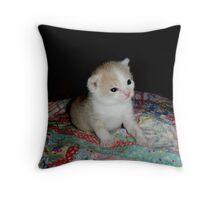 Wild Bill Hickock Kitten I know I am cute! Throw Pillow