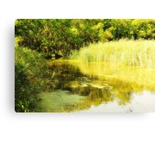 Forest River on a Sunny Summer Day Canvas Print
