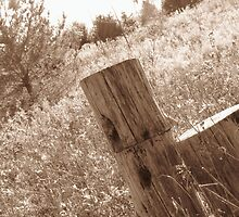 Old Wood  by Atheum