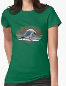 Preening Time - Black-headed Gull Womens Fitted T-Shirt