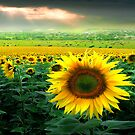 Sunflower Planet by Igor Zenin