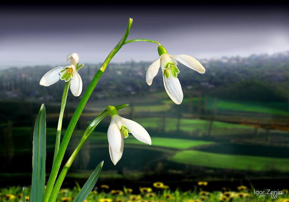 Spring by Igor Zenin
