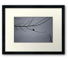 Small Bird Framed Print