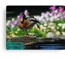 Morning Tai Chi Canvas Print