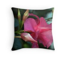 Mandevilla Flower and Bud Throw Pillow