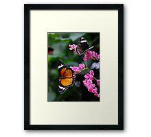 Butterflies Paradise Framed Print