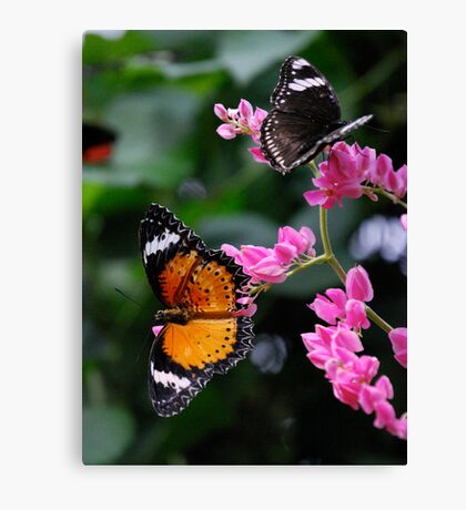 Butterflies Paradise Canvas Print