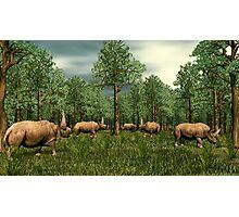 Elasmotherium Photographic Print