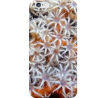 Octocoral, Papua New Guinea iPhone Case/Skin