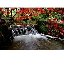 """Autumn's Water Fall in Red"" Photographic Print"