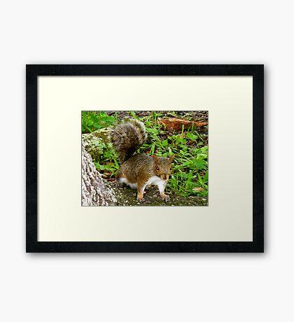 Especially playful Framed Print