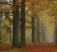 The November lane two days later by jchanders