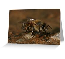 Could I Bee Closer Greeting Card