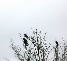 Ravens in the fog by moonlight545