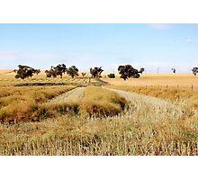 the start of the harvest [nikon d40 camera] Photographic Print