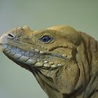 Lizard Profile by borstal