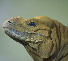 Lizard Profile by borstal
