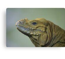 Lizard Profile Canvas Print