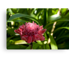 Thai Flower Canvas Print