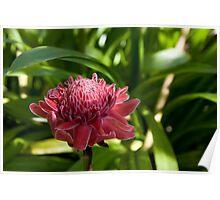 Thai Flower Poster