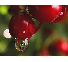 High Bush Cranberries and Raindrops Photographic Print