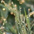 Diamonds and Fairies in the Morning Grass by Pamela Jayne Smith
