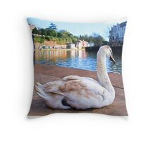 Young Adult Swan - Impressions Throw Pillow