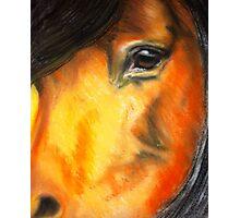 The Horse's Gentle Eye Photographic Print