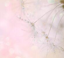 Twinkle Twinkle by Jacky Parker