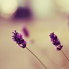 lavender love by Shilpa Shenoy