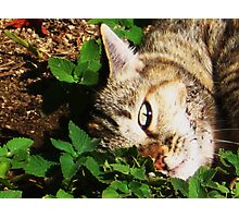 Darla taking a nip Photographic Print