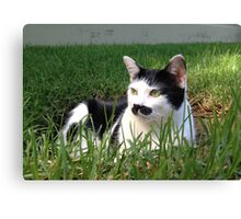Felix The Moustache Cat - In grass Canvas Print
