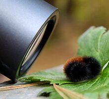 Camera Shy by Johanne Brunet