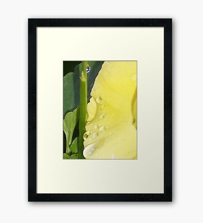 Yellow Tears Framed Print
